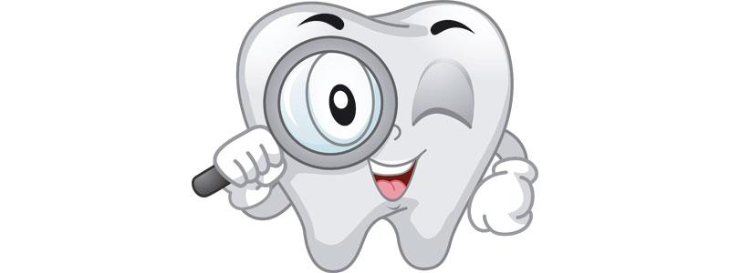curiosidades sobre los dientes clínica ortodoncia lahoz rouch